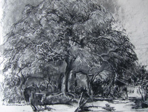 Algarrobo ± (60×50)cm houtskool